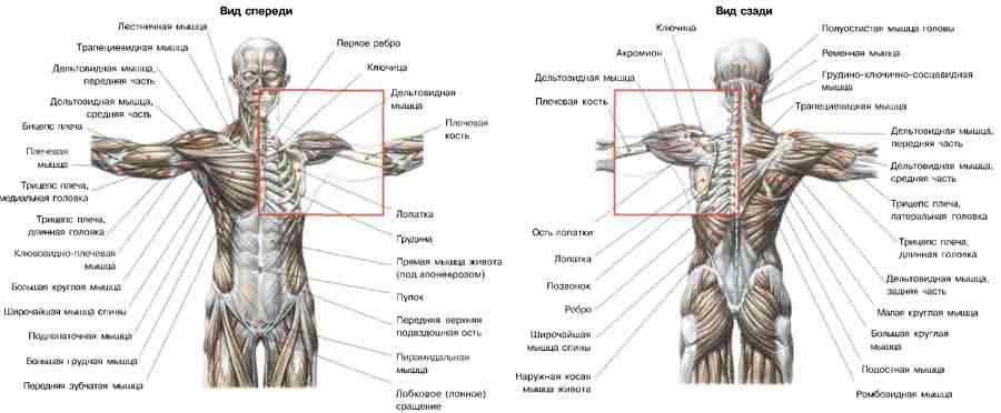 Пояс Плечевой фото