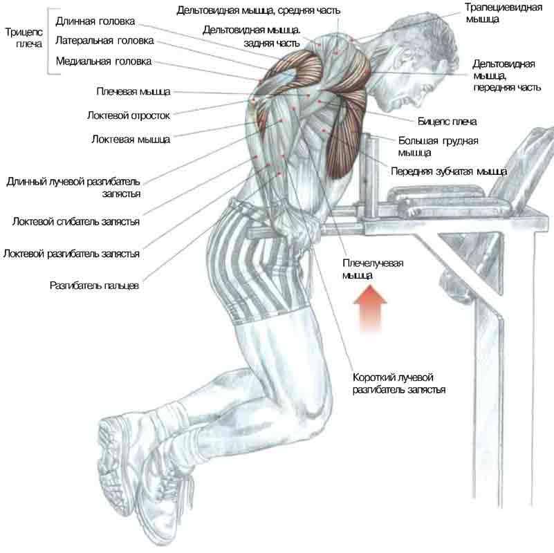Выполнение упражнения 10-20