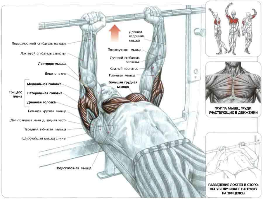 накачать мышцы гантелями картинки