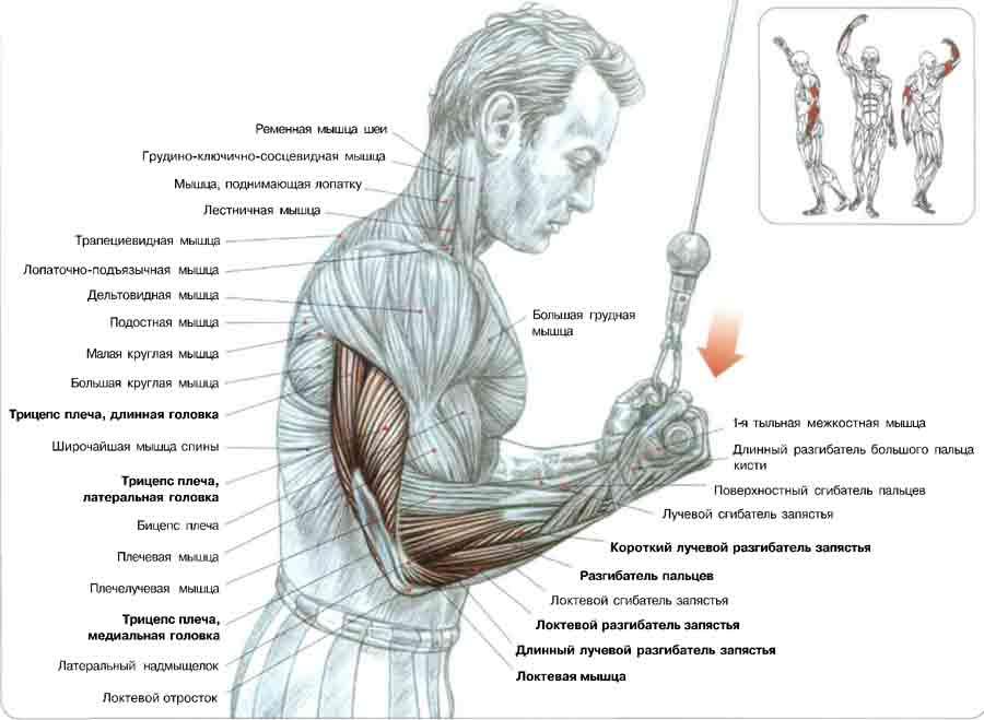 Болит локоть при полном разгибании руки трицепс блока лечение разрыва связок коленного сустава