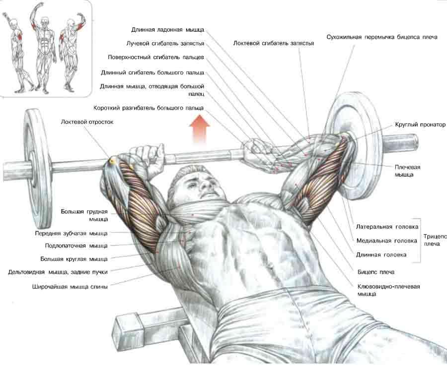Упражнение на руки трицепс