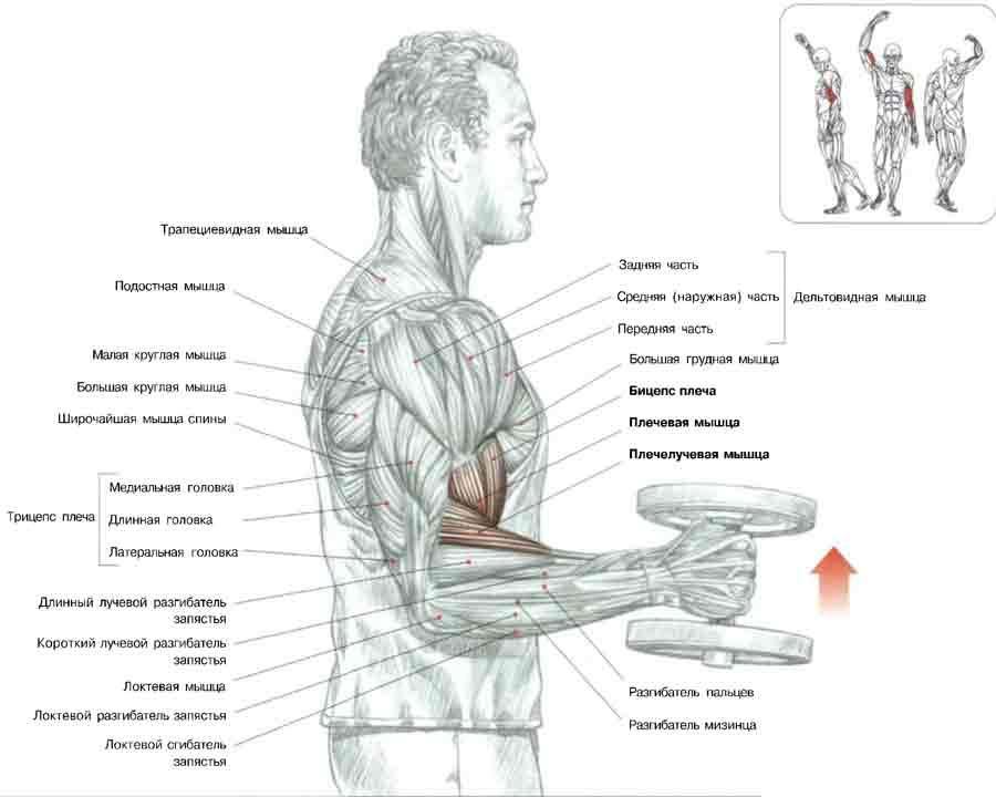 Мускулы в домашни условия